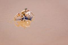 Krabbe auf dem Ufer Stockfotografie