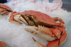 Krabbe auf Eis am Landwirtmarkt Stockbild