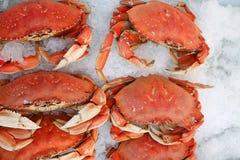 Krabbe auf Eis am Landwirtmarkt Stockfotos