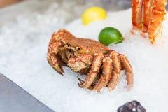 Krabbe auf Eis mit Kalk stockbilder