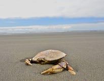 Krabbe auf Küste Lizenzfreie Stockfotos