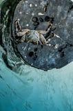 Krabbe auf Klotz Lizenzfreies Stockbild
