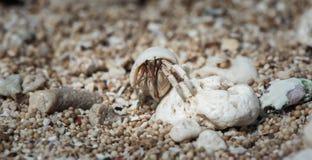 Krabbe Awaitening Herbit Lizenzfreie Stockfotografie