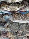 Krabbe der frischen Blume, blaue Krabbe Stockfotos