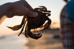 Krabbe in der weiblichen Hand Lizenzfreie Stockfotos
