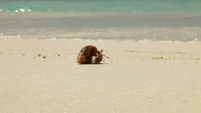 Krabbe, die über den Strand sich bewegt stock video footage