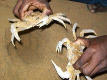 Krabbe, die im Strand durch Fischer fängt Stockfotos