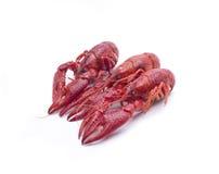 Krabbe drei Stockfotos