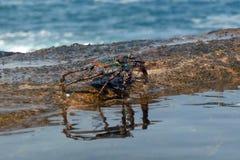 Krabbe durch das Meer Lizenzfreies Stockfoto