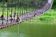 Krabbe-Essen des Makakens, der auf der alten Hängebrücke sitzt Lizenzfreie Stockfotos