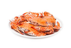 Krabbe gedämpfte Meeresfrüchte lokalisiert auf weißem Hintergrund Lizenzfreies Stockfoto