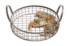 Krabbe getrennt Stockbild
