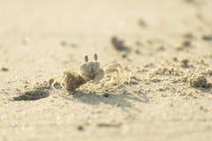 Krabbe graben ein Loch Lizenzfreie Stockfotografie