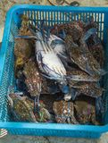 Krabbe im Korb Lizenzfreie Stockfotografie