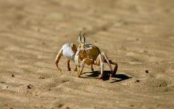 Krabbe im Sun Stockfotografie