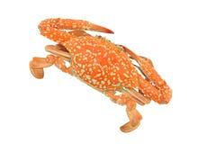 Krabbe lokalisiert auf weißen Beschneidungspfaden Lizenzfreies Stockfoto