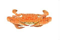Krabbe lokalisiert auf weißen Beschneidungspfaden Lizenzfreie Stockfotografie