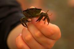 Krabbe in meiner Hand lizenzfreie stockfotografie