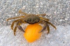 Krabbe mit Melone Lizenzfreies Stockfoto