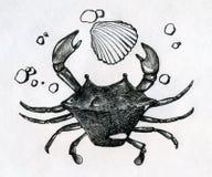 Krabbe, Oberteil und etwas peebles Lizenzfreie Stockbilder