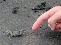 Krabbe und Finger Stockfotografie