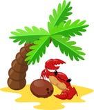 Krabbe und Kokosnuss stockbild