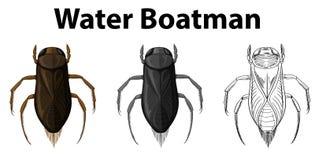Krabbelkarakter voor waterboatman vector illustratie