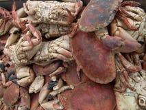 Krabben royalty-vrije stock foto's