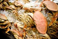 Krabben royalty-vrije stock foto