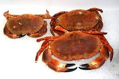 Krabben lizenzfreies stockfoto