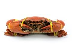 Krabben Royalty-vrije Stock Afbeeldingen
