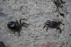 Krabben Stock Afbeeldingen