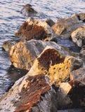 5 Krabben auf dem Foto Stockbild