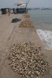 Krabben auf dem Pier von Jamestown, Accra, Ghana Lizenzfreie Stockfotos