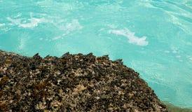 Krabben auf einem Felsen Lizenzfreies Stockbild