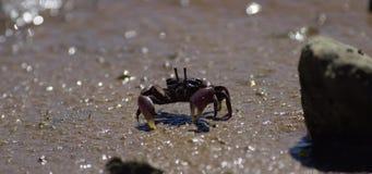 Krabben auf wütenden Ebenen stock video