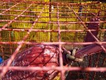 Krabben-Blockierkäfig mit Boje Stockfoto
