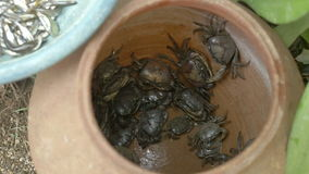 Krabben, crabbing, kleipot, gevangen krab, seizoen, stock footage