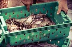 Krabben in de groene plastic doos bij de vissenmarkt Royalty-vrije Stock Fotografie