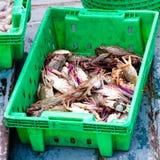 Krabben in de groene plastic doos bij de vissenmarkt Royalty-vrije Stock Foto