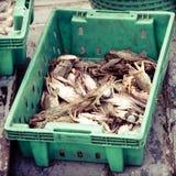 Krabben in de groene plastic doos bij de vissenmarkt Stock Afbeelding