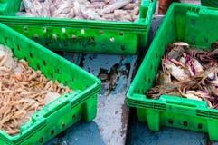 Krabben in de groene plastic doos bij de vissenmarkt Royalty-vrije Stock Afbeelding