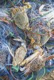 Krabben in der Masche Stockbilder