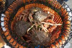 Krabben levend in een te verkopen mand royalty-vrije stock fotografie