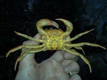 Krabben op hand, Iran, Gilan, Rasht stock foto's