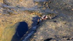 Krabben op het strand stock footage