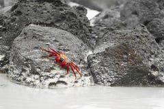 Krabben overal stock afbeelding