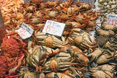 Krabben und andere Krebstiere für Verkauf lizenzfreie stockfotos