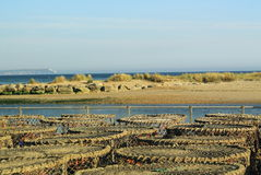 Krabben-und Hummer-Fallen Stockfotos