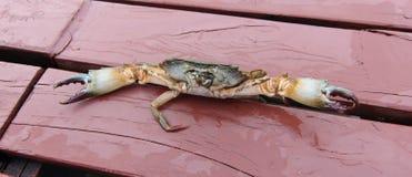 Krabbenangriff auf Holz Stockfotos